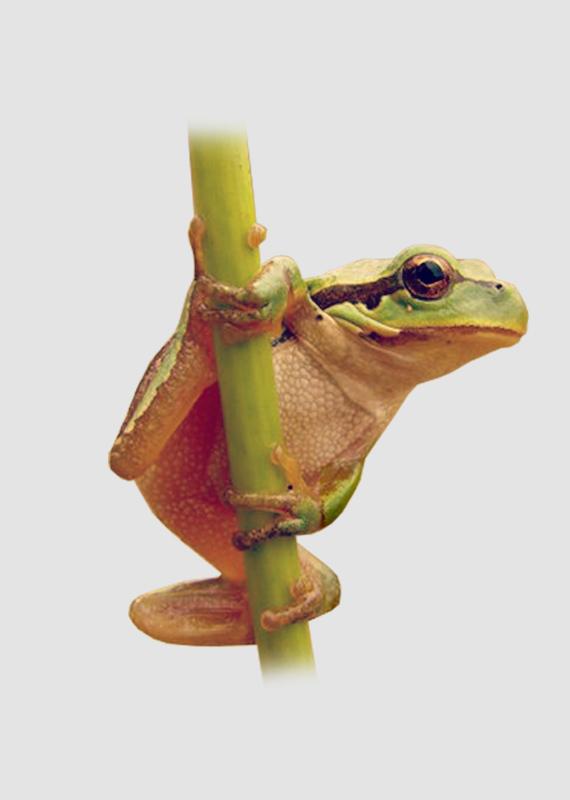 anfibios-uma-pata-na-agua-outra-na-terra