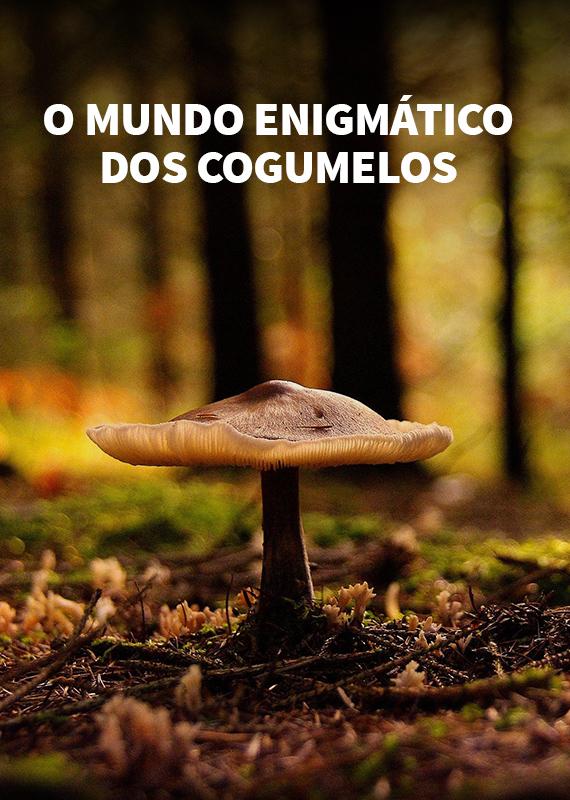 o-mundo-enigmatico-dos-cogumelo