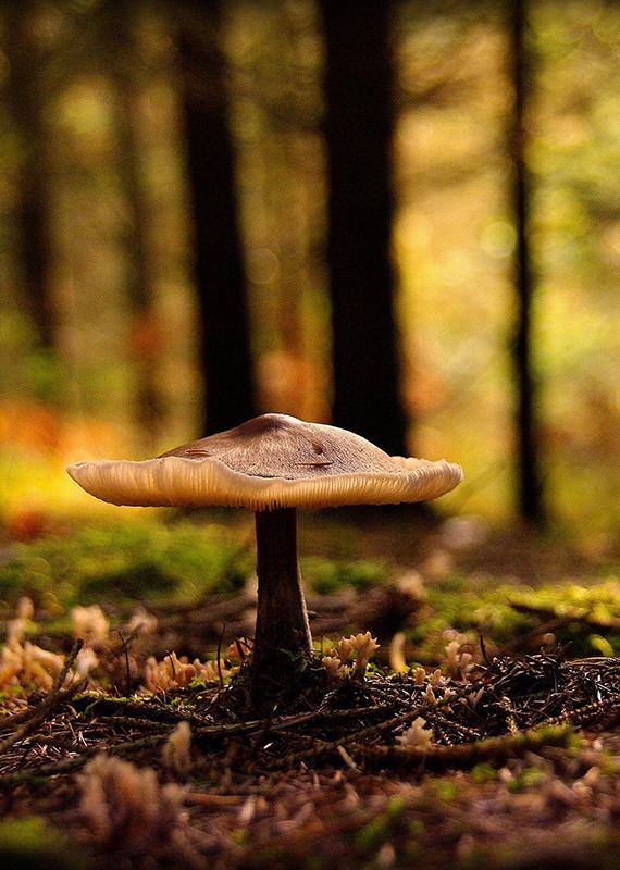 saberes-e-sabores-da-floresta-2