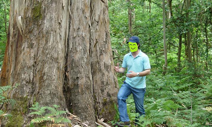 eucalyptus-globulus/