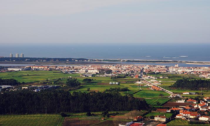 Palmeira de Faro