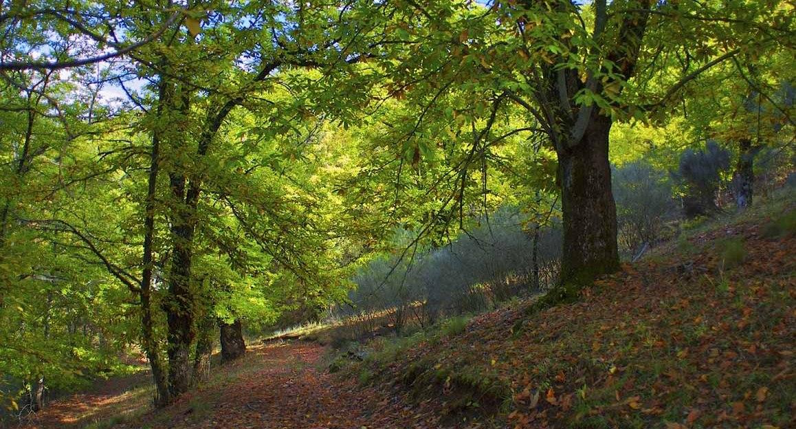 """Município de Esposende convida a descobrir  """"Saberes e Sabores da Floresta"""""""